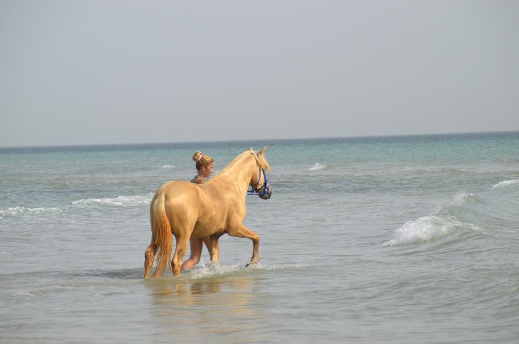 Zwemen met paarden