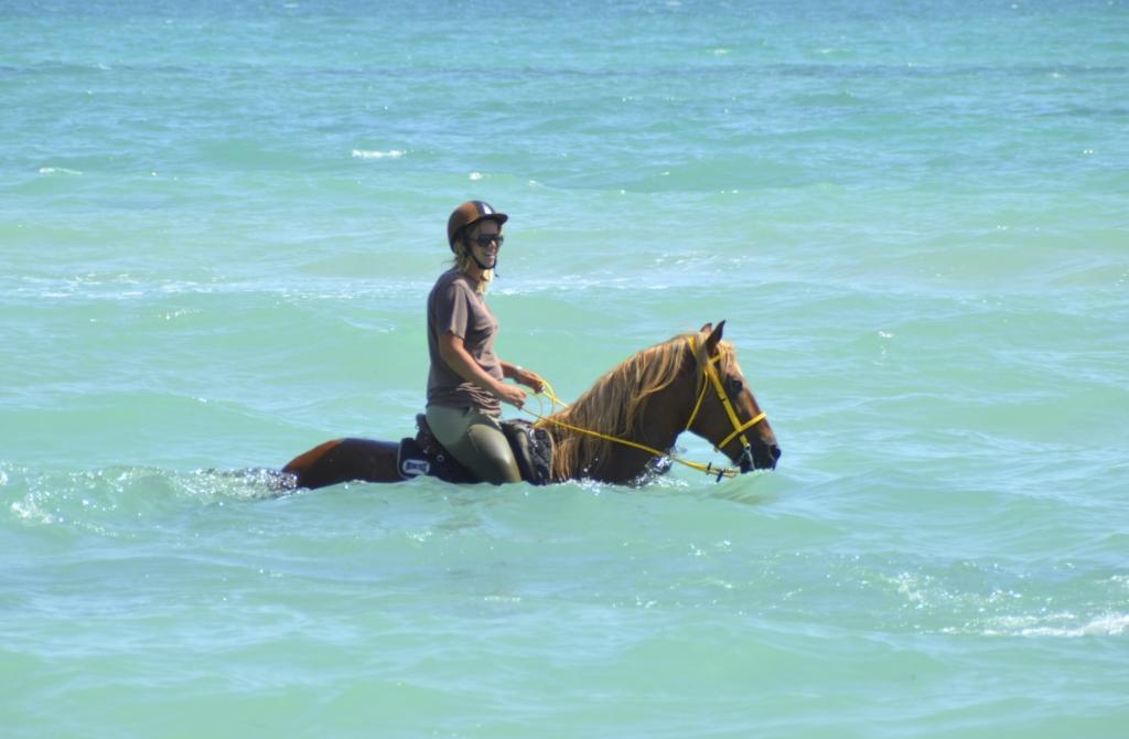 zwemmen met paarden in Djerba