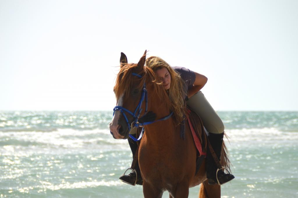 Arabisch Paard in de Zee