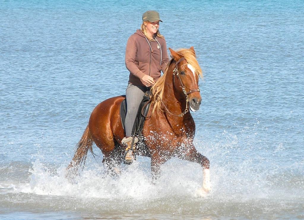 Berberhengst in water
