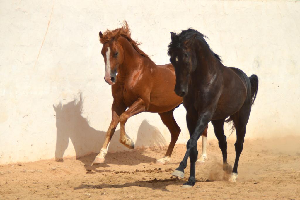 Paarden in beweging
