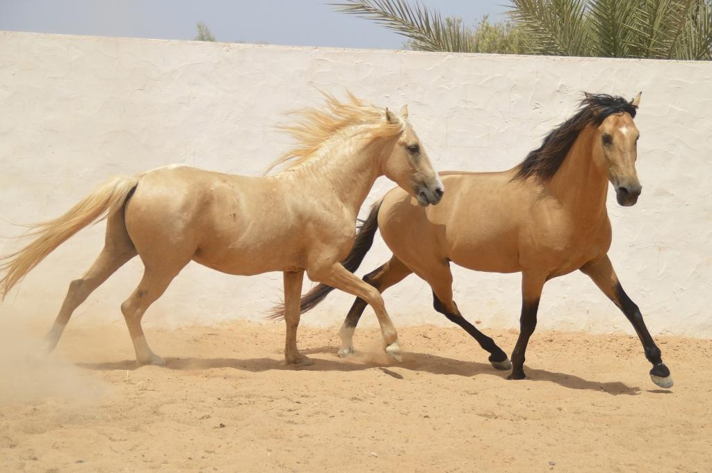 Paarden in de stal