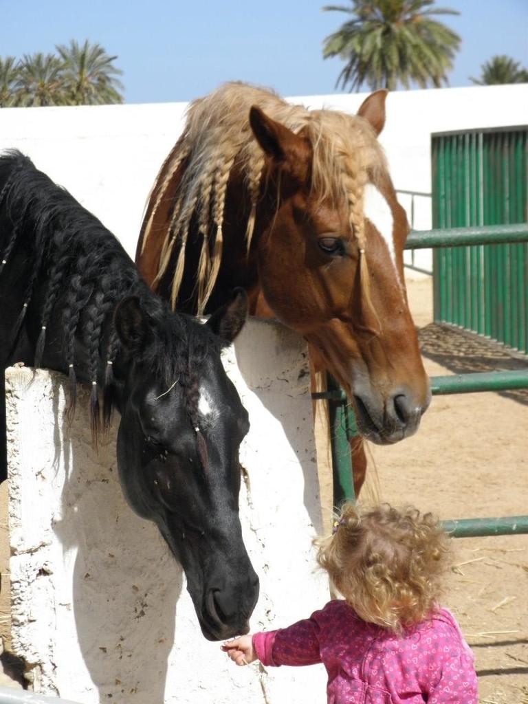 interactie met paarden