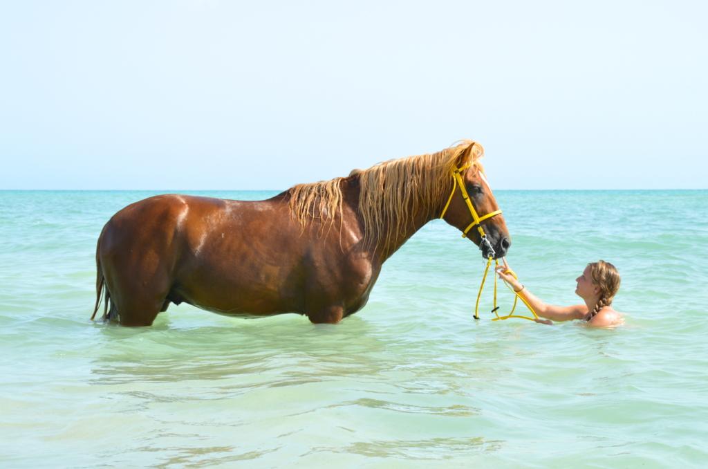 Zwemmen met Paarden in Ruitervakantie
